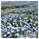 種 花たね ネモフィラ 1袋(200mg) / 花種 ...