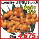 種ショウガ 大特価大ショウガ 5kg