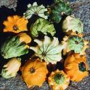 花たね おもちゃかぼちゃ クラウンミックス 1袋(5粒)