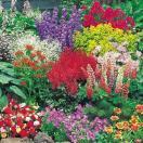 花たね 宿根草ミックス 1袋(200mg)