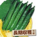 野菜たね キュウリ F1夏秋いちばんキュウリ 1袋(1ml)