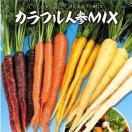 野菜たね ニンジン F1カラフル人参ミックス 1袋(100粒)