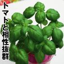 野菜たね ハーブ バジル 1袋(2ml)