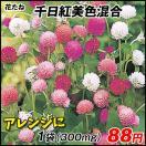 花たね 千日紅美色混合 1袋(100粒)