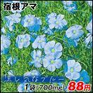 花たね 宿根アマ 1袋(500粒)