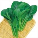 野菜たね 小松菜 F1丸葉小松菜 1袋(8ml入)