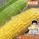 日本最速級出荷のトウモロコシ ゴールドラッシュ送料無料 1セット5本入り 複数購入の場合、1箱におまとめ【クール便】 6月中旬-7月上旬頃より順次出荷