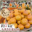 """【送料無料】和歌山・奈良産 """"富有柿"""" 訳..."""