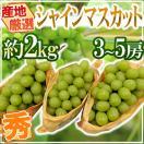 """""""シャインマスカット"""" 約2kg 3〜5房 秀品..."""