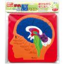 EVA脳パズル パズル ゲーム 玩具 おもちゃ 脳 人の体のしくみ 学習 理科 知育玩具
