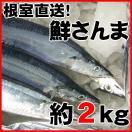 秋刀魚 北海道 さんま とろサンマ 約2kg 15〜17尾 1尾125g前後 根室産 お刺身...