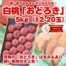 【セール】 ギフト 白桃 送料無料 山形県産 おどろき 5kg(12-20玉) モモ もも