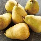 ギフト 洋梨 送料無料 山形県産 西洋梨 マルゲリットマリーラ 3kg(5-8玉)