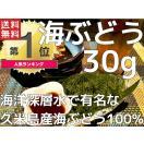 海ぶどう プチプチ 沖縄県久米島産海ぶどう(30g)お土産 送料無料 海洋深層水で有名な久米島産海ぶどう100%
