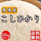 米 送料無料 令和元年産 愛媛県産 コシヒカリ20kg(10kg×2) こしひかり 20キロ