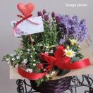 誕生日 母の日  季節の花 春 寄せ鉢 バスケット 人気 おまかせ アレンジ ギフト Sサイズ  送料無料 鉢花 鉢植え  寄せ植え   お祝い 記念日 プレゼント