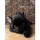 リアルな猫のぬいぐるみ 【黒猫(成猫)open eye ver.】猫 ねこ ネコ 誕生日 プレゼント ギフト クリスマス ペット ペットロス