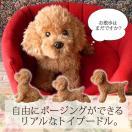 リアルな犬のぬいぐるみ【トイプードル アプリコット(ふわモコ生地タイプ)】