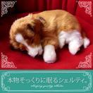 リアルな犬のぬいぐるみ【本物そっくりに眠るシェルティのぬいぐるみ】犬 いぬ イヌ 誕生日 プレゼント ギフト クリスマス ペット ペットロス