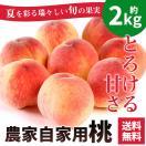 お中元 ギフト 送料無料 フルーツ 果物 桃 とろける甘さ 農家自家用もも 8〜9玉 約2kg