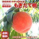お中元 御中元 果物 桃 詰め合わせ ギフト ギフトランキング ギフト 送料無料 フルーツ 農家自家用 長野県産もぎたて桃 約2kg フルーツ もも 訳あり ワケ わけ