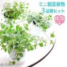 ミニ観葉植物 3品種 セット