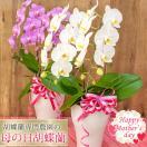 母の日 今だけ★ポイント5倍★ ランキング1位! 花 鉢植え 胡蝶蘭 品種選べる2本立 ギフト プレゼント