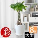 観葉植物 選べる セラアート鉢 8号鉢 パキ...
