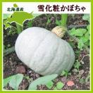 雪化粧かぼちゃ 10kg (4〜7玉)×1箱 北海道...