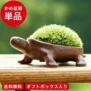 亀盆栽(こけ盆栽 コケ 苔 苔盆栽 ミニ盆栽 盆栽 bonsai ボンサイ かめ ぼんさい)*o-M-bonsai_030*