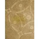【DVD】Fate/Grand Order THE STAGE -絶対魔獣戦線バビロニア-(完全生産限定版)