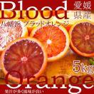 ブラッドオレンジ 5Kg 特裁 愛媛県八幡浜市 白石さんのブラッドオレンジ 市場直送 送料無料