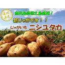 新じゃが じゃがいも 5キロ 5kg 徳之島産 ニシユタカ 馬鈴薯 バレイショ 鹿児島産