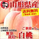【2017年度 早期予約】 桃 白桃 5kg ご家庭用 無袋栽培 約13玉~25玉入り もも 山形県産 お取り寄せ