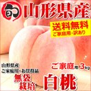 【2017年度 早期予約】 桃 白桃 3kg ご家庭用 無袋栽培 約8玉~15玉入り もも 山形県産 お取り寄せ
