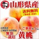 【2017年度 早期予約】 桃 黄桃 5kg ご家庭用 無袋栽培 約18玉〜25玉入り もも 山形県産 お取り寄せ