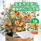 花の種 ブレンドパック フラワリーランド 1パック 秋蒔き 春蒔き 栽培 種まき 簡単 ガーデニング 庭造り 珍しい花の種 外国の花
