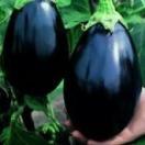 V178 EGGPLANT BLACK BEAYTY (20粒)