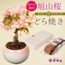母の日ギフトにおすすめ:母の日開花桜&どら焼きセット*