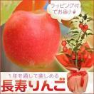 :長寿りんご*ラッピング付