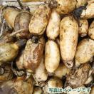 佐賀県産 新レンコン 4kg 小サイズ