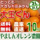 (送料無料)(大玉みかん)食べ応えバツグン ...