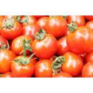 とくちゃんのミニトマト2.5kg(S〜Lサイ...