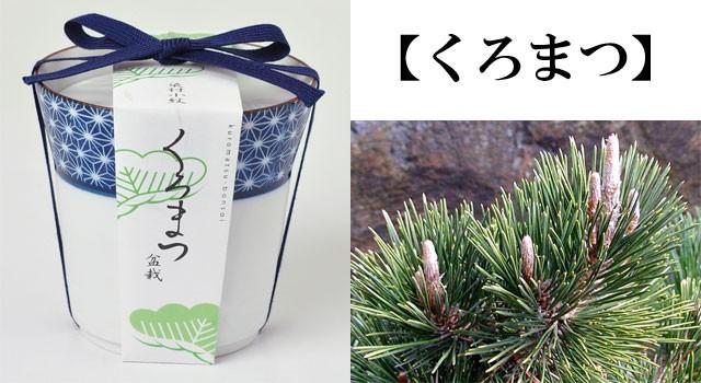 『栽培セット』 染付小紋盆栽栽培セット1