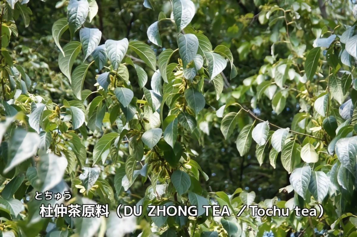 ばんどう紅茶園 生姜入り杜仲茶 ティーバッグ 3g 60袋入 × 2個の商品画像|2