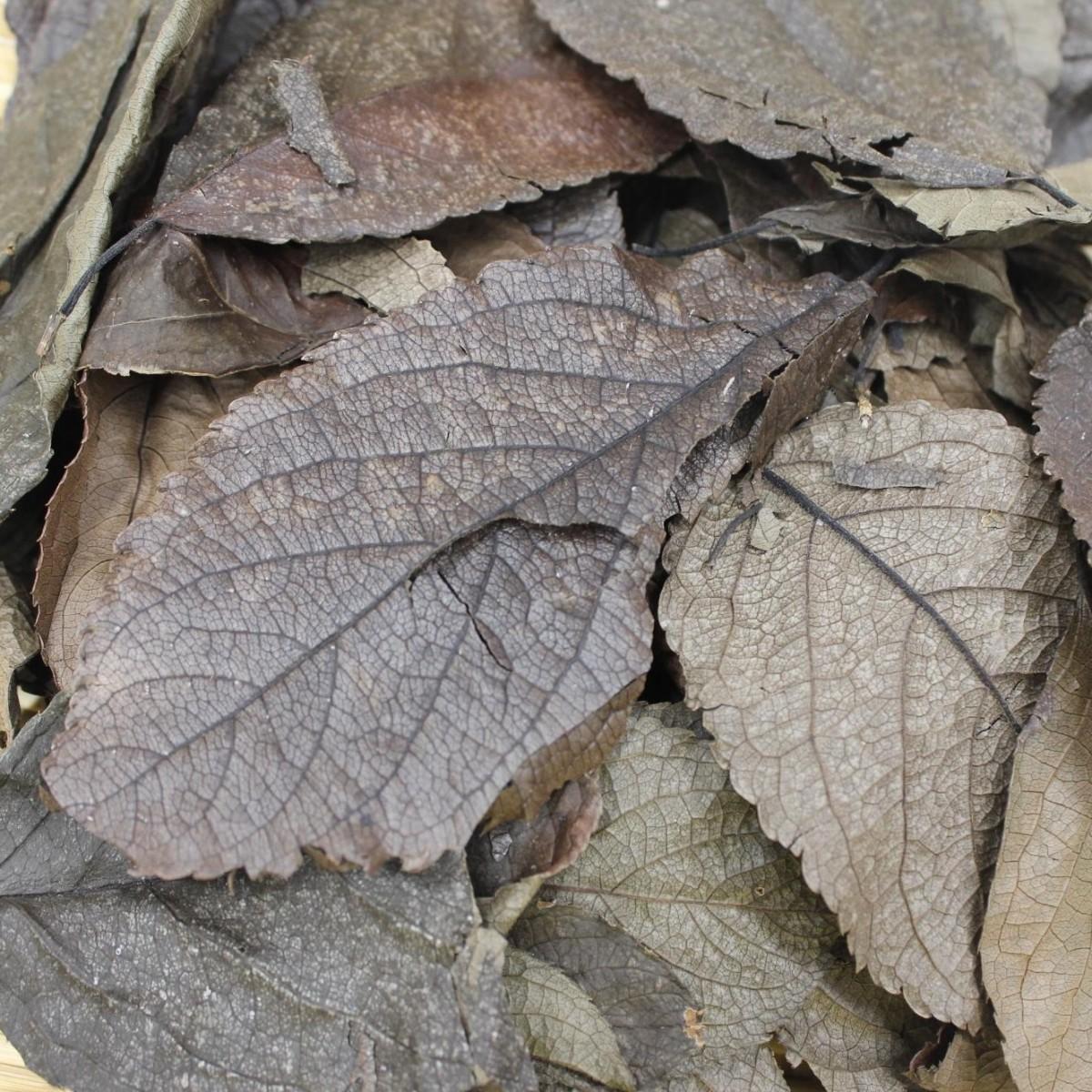 ばんどう紅茶園 生姜入り杜仲茶 ティーバッグ 3g 60袋入 × 2個の商品画像|4