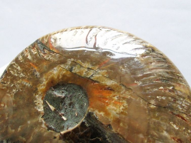 虹入りアンモナイト化石 T485-2477