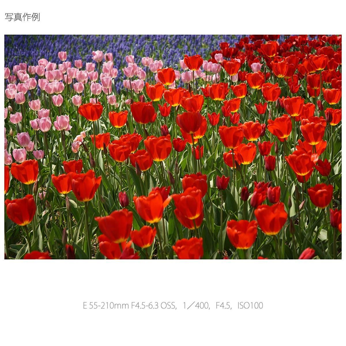 ソニー E 55-210mm F4.5-6.3 OSS SEL55210 Sの商品画像|3