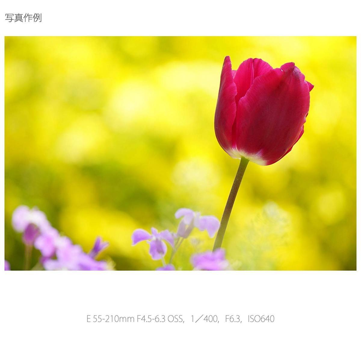 ソニー E 55-210mm F4.5-6.3 OSS SEL55210 Sの商品画像|4