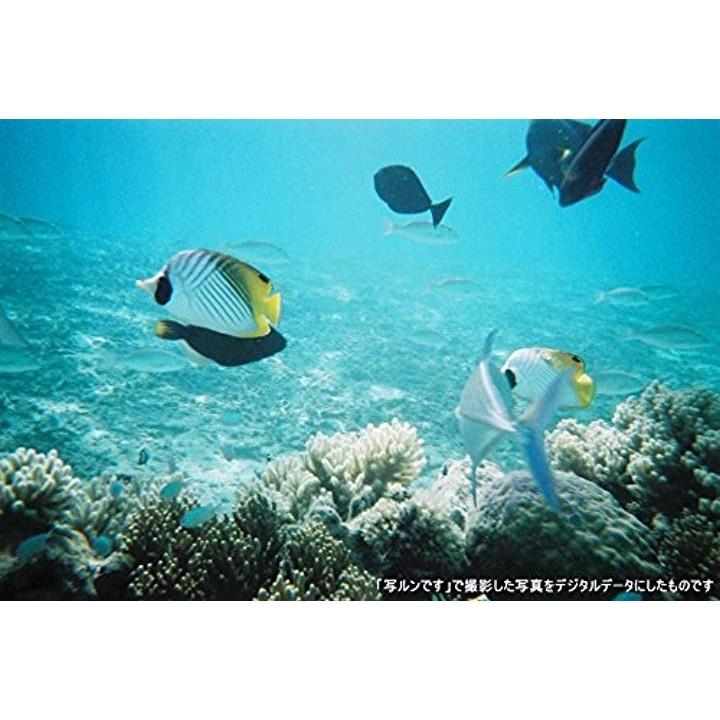 富士フイルム 水に強い写ルンです New Waterproof 27枚撮の商品画像|3